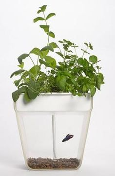 Gift Idea: Back to the Roots 'Aquafarm' Aquaponic Garden & Self Cleaning Fish Tank