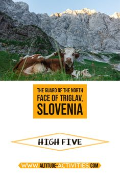 Every year cows in Slovenia are becoming smarter-> @matevzvukotic said high five to this cow, and you can see her response.🤣 Extraordinary experience in summer 2020 😁. For more funny experiences---> give it a go. For more info, do not hesitate to contact us! 🤗 Many amazing climbing routs behind this young lady😮 How To Become Smarter, What Activities, Ice Climbing, High Five, Extreme Sports, Slovenia, Cows, Rafting, Need To Know