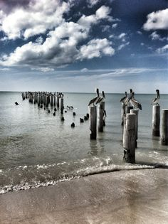 Naples Beach, Florida.   I love Pelicans and I love pilings.   So, I really love this photo.