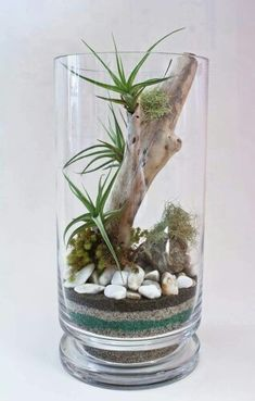 Terrarium Ideas Book - Slideshow from Gardener's Supply create a mild woodland setting, display miniature tropicalS or design a attractive fairy garden using plants, curios and found objects, such as pebbles and sea glass. Decor Terrarium, Air Plant Terrarium, Glass Terrarium, Air Plant Display, Plant Decor, Succulents Garden, Planting Flowers, Air Plants Care, Decoration Plante