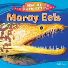 Moray Eels by Ruth Owen 597.43 OWE Once a moray eel has clamped down on a fish, something terrifying happens...a second set of jaws lunges out of its throat and begins to devour its prey! Readers won't be able to turn away as they learn all about the moray eel, its adaptations and habitat, and the dangers it presents to scuba divers.