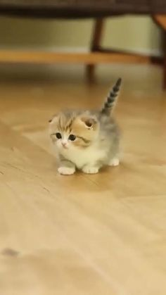 Cute Wild Animals, Baby Animals Pictures, Super Cute Animals, Cute Animal Videos, Cute Little Animals, Cute Animal Pictures, Cute Baby Dogs, Baby Cats, Cats And Kittens
