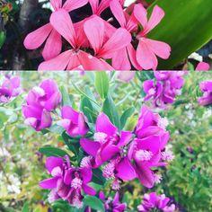 #flowersofcyprus #livinginparadise #begrateful #lebeseelischeidentität #seieinheld