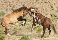 Wild Horses – Sand Wash Basin