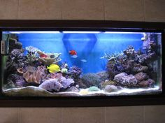 An aquarium at home is a lot of work but it is a great hobby for the entire family.
