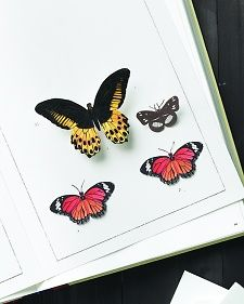 1000 images about science land animals on pinterest for Martha stewart butterfly template