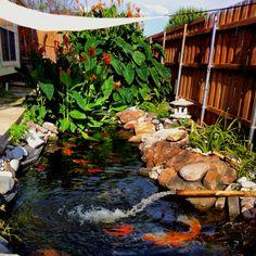 Koi pond with big plants and nice rocks Backyard Water Feature, Ponds Backyard, Garden Ponds, Backyard Waterfalls, Garden Fountains Outdoor, Pond Fountains, Outdoor Water Features, Water Features In The Garden, Koi Pond Design