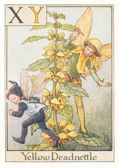 Antique Alphabet Flower Fairy Print, the Yellow Deadnettle