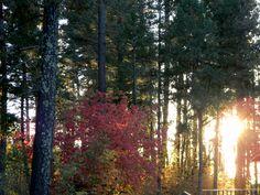 Autumn in Cloudcroft, New Mexico
