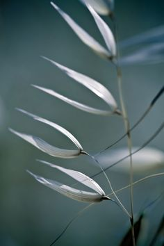 ♀  Bokeh photography, plants
