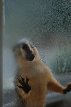 Squirrel lapping water from window (Photo: David Grant, CC license)