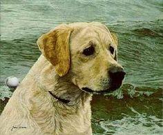 """Yellow Labrador"" by John Weiss"