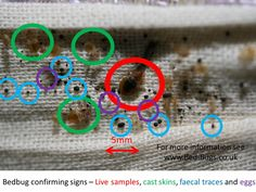 The methods to getting rid of bed bugs have been tried, tested and are true. If you want to know how to get rid of bed bugs fast, follow this advice. The instructions here need to be followed precisely, without skipping over anything.