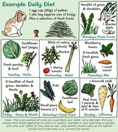 example, a rabbit could have 1 egg cup of pellets and a pile of hay per day, plus a selection of vegetables. One day it might be a cauliflower leaf and fresh basil/parsley and another day blackberry leaves, fresh grass and a small carrot. Bunny Cages, Rabbit Cages, House Rabbit, Rabbit Garden, Rabbit Baby, Rex Rabbit, Diy Bunny Cage, Rabbit Feeder, Rabbit Litter