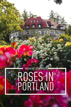 Rose Gardening Are you visiting Portland in the summer? Portland Oregon is commonly called the City of Roses or Rose City. Check out this article to see the best places to find the roses Visit Portland, Visit Oregon, Portland Oregon, Oregon Travel, Travel Usa, Rose Garden Portland, Rose House, Crater Lake National Park, Cherry Blossom Season