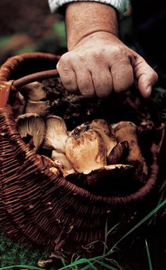Wild Mushroom Crostini  Complete Mushoom Book published by Quadrille.  Photograph: Alastair Hendy