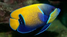 mořské rybičky - Hledat Googlem
