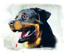 Rottweiler by Tori Beveridge
