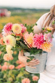 Flower Garden Plans, Cut Flower Garden, Flower Farm, Cactus Flower, Growing Flowers, Fresh Flowers, Beautiful Flowers, Flowers For You, Flowers Wallpaper