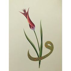 Arabic Art, Turkish Fashion, Islamic Art, Tulips, Miniatures, Calligraphy, Wallpaper, Drawings, Flowers