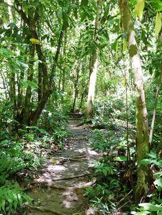 Senderos del Parque Ecológico Rio Claro