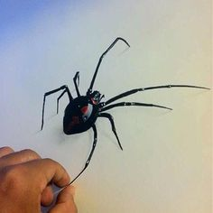 Black widow #spider art #drawing #sketch colored pencils