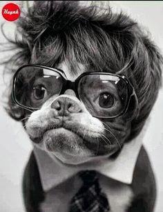 La moda hipster llega a los perros.