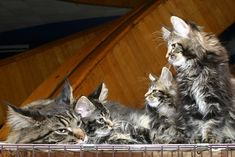 Non-Toxic Flea Treatments for Cats
