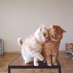 10 Pictures Of Extremely Lovey-Dovey Cats That Will Melt Your Heart - World's largest collection of cat memes and other animals Cute Cats And Kittens, I Love Cats, Crazy Cats, Kittens Cutest, Cute Baby Animals, Animals And Pets, Funny Animals, Cat Aesthetic, Cute Creatures