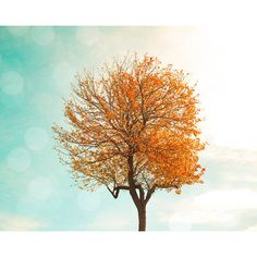 autumn photography nature fall photography tree 8x10 24x36 fine art... (€18) ❤ liked on Polyvore featuring home, home decor and wall art