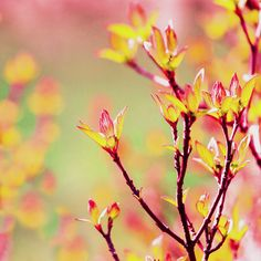 Awesome Showcase of Spring Photography