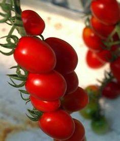 Szczegóły na temat uprawy warzyw w hydroponikach