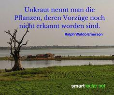 Unkraut nennt man die Pflanzen, deren Vorzüge noch nicht erkannt worden sind. - Ralph Waldo Emerson  #Zitat