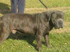 19 Best Adoptable Adorables Images Pet Adoption Adoption Dog Houses