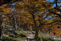 Photograph On my way to Fitz Roy in Patagonia II by Bob Machado on 500px