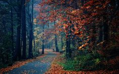 деревья, листва, осень, Природа, парк, лавки