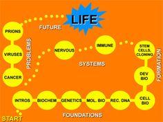 Introductory Biology / Biologia : materiali del corso del Mit di primavera 2013. Contiene dei sunti con domande e risposte per ogni lezione, esercizi ed esami (con le risposte).