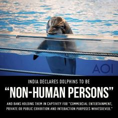 """""""Whereas cetaceans in general are highly intelligent and sensitive, and various scientists who have researched dolphin behavior have suggested that the unusually high intelligence; as compared to other animals means that dolphin should be seen as 'non-human persons' and as such should have their own specific rights and is morally unacceptable to keep them captive for entertainment purpose,"""" reads the ministry's statement."""