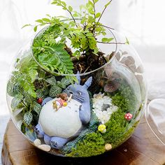 A set of 4 Totoro Terrarium Material Accessories Ghibli Studio Fairy Garden Miniature . - A Set 4 Totoro Terrarium Material Accessories Ghibli Studio Fairy Garden Miniature Girl lying in To - Mini Terrarium, Marimo Moss Ball Terrarium, Terrariums Diy, Garden Terrarium, Succulent Terrarium, Succulents Garden, Succulent Outdoor, Terrarium Wedding, Hanging Terrarium