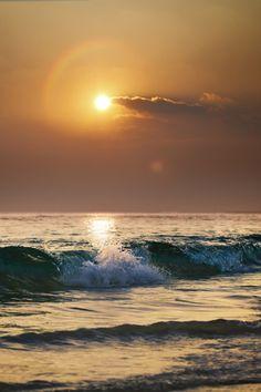 canislupvs: Sunset time - by: Vitaliy Sokol