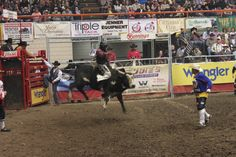Xtreme Bulls at the Black Hills Stock Show & Rodeo (#BHStockShow) in #RapidCity #SouthDakota