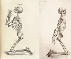 Skeleton praying, tab XXXVI, Osteographia, 1733, and Skeleton bound, tab. X, The Anatomy of the Human Body, 1740