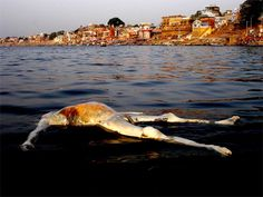 Scary images depicting the ugly side of river pollution in India are a grave reminder of the plight of Varanasi and the holy river. Brave, Scary Images, Rio, End Times Signs, Water Pollution, Varanasi, Incredible India, Mother Earth, Creepy