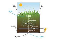 moss energy - Google Search