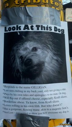 lol this is something i would do! haha so funny Dog Pictures, Funny Pictures, Funny Images, Funny Animals, Cute Animals, Animals Dog, Haha, Jenifer Lawrence, Dog Poster