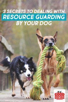 Dog Resource Guardin Dog Resource Guarding Can Be A Big Problem