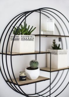 Cactus on a circle shelf