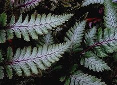 Patterns Nature Artwork, Nature Photos, Poster Prints, Framed Prints, Art Prints, Landscape Photography, Nature Photography, Japanese Painted Fern, Thing 1