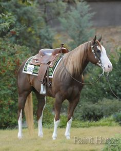 A standout performer in roping classes—and a solid all-around competitor—Lookie A Diamond Star captured two enviable titles at the 2012 APHA World Championship Show.