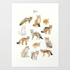 A chart featuring the Blanford's fox, Red fox, Fennec fox, Arctic fox...